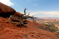Dead Fall, Arches National Park