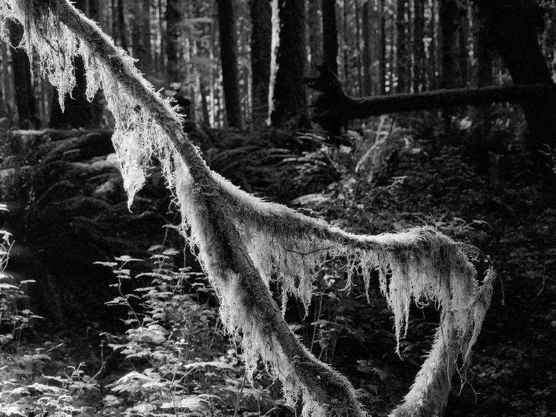 Hoh Rainforest, Olympic National Park, Washington (2017)